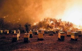 Πώς θα είναι ένας κόσμος χωρίς μέλισσες; (Φωτ. SOOC / ΜΕΝΕΛΑΟΣ ΜΥΡΙΛΛΑΣ)