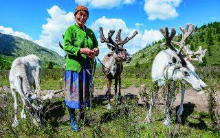 Η ζωή των ημινομαδικών βοσκών, που είναι γνωστοί ως Ντούκα ή Ταατάν, περιστρέφεται γύρω από τους εξημερωμένους ταράνδους τους, οι οποίοι χρησιμοποιούνται ως μέσο μεταφοράς και τους καλύπτουν πολλές από τις καθημερινές τους ανάγκες. Φωτ. SHUTTERSTOCK