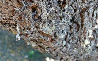 dorean-ekpaideysi-stin-kalliergeia-mastichodentron0
