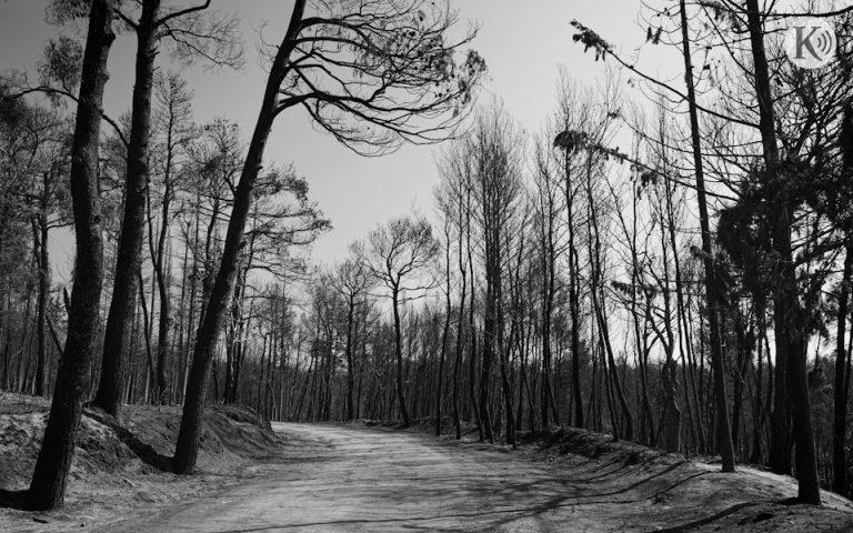 Ράδιο «Κ»: Η πυροπροστασία, οι ανεμογεννήτριες και τα «σωστά δέντρα»
