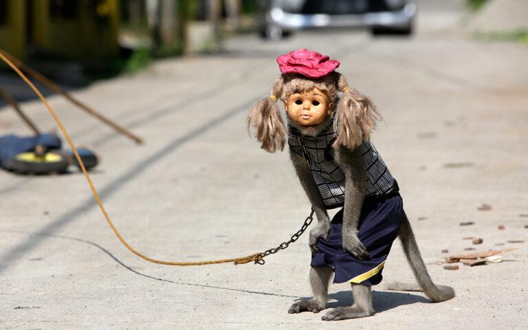 Η «Μάσκα της μαϊμούς»