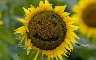 Καλοκαιρινά χαμόγελα