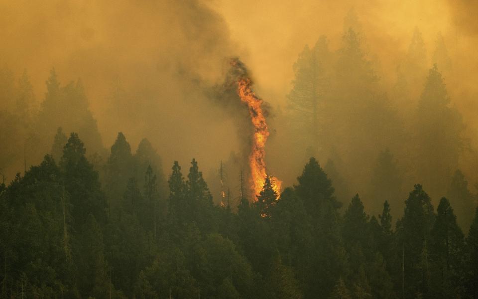 kalifornia-pyrosvestes-tyligoyn-me-fylla-aloyminioy-tis-sekogies-ystati-prospatheia-gia-na-sothoyn-dentra-chiliadon-eton5