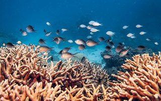 Ο ύφαλος έχασε πάνω από 50% των κοραλλιών του μεταξύ 1995-2017, ως αποτέλεσμα της θέρμανσης των νερών και των τροπικών καταιγίδων (φωτ. REUTERS).
