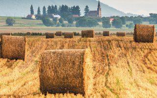 Η Ρουμανία, η μεγαλύτερη εξαγωγέας σιτηρών της Ευρώπης αυτή την εποχή, βλέπει τις τιμές των τροφίμων να αυξάνονται με διψήφιο ποσοστό. Η κυβέρνηση του Φλορίν Σίτου επιδιώκει να ελαττώσει την εξάρτηση από εισαγόμενα επεξεργασμένα τρόφιμα ως μέσον για να υποχωρήσουν οι τιμές (φωτ. SHUTTERSTOCK).