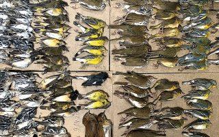 Η εθελόντρια ορνιθολογικής εταιρείας, Μελίσα Μπράιερ, κατέγραψε τουλάχιστον 300 νεκρά πουλιά σε μία ημέρα στα πεζοδρόμια γύρω από τους νέους πύργους του Παγκόσμιου Κέντρου Εμπορίου.