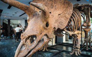 big-john-sto-sfyri-o-megalyteros-skeletos-trikeratopa-561482755