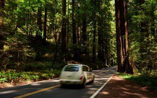 Οδηγώντας στη Λεωφόρο των Γιγάντων, που διατρέχει το πάρκο Humboldt Redwoods, στη βόρεια Καλιφόρνια.  Drew Kelly, © 2021 The New York Times Company