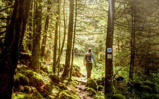 Aφήνοντας πίσω σας την Ελάτη, το πυκνό δάσος θα σας συνοδεύει στο πρώτο κομμάτι της διαδρομής. (Φωτογραφίες: Περικλής Μεράκος)