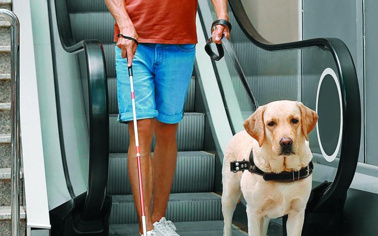 Οταν ο σκύλος-οδηγός είναι σε εργασία δεν αντιδρά σαν ένα απλό κατοικίδιο, οπότε δεν πρέπει να του αποσπάμε την προσοχή. (SHUTTERSTOCK)